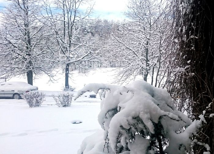 Winter Cold Temperature Snow Frozen Weather Nature Tree Snowing No People Beauty In Nature Day Outdoors Landscape Sky