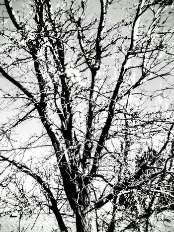 Black And White Trees Nature Photography Check This Out Taking Photos