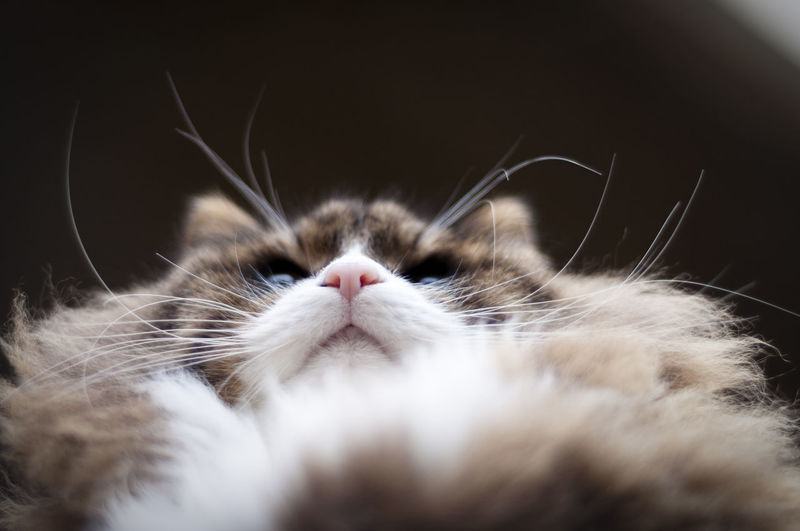 cat's nose and