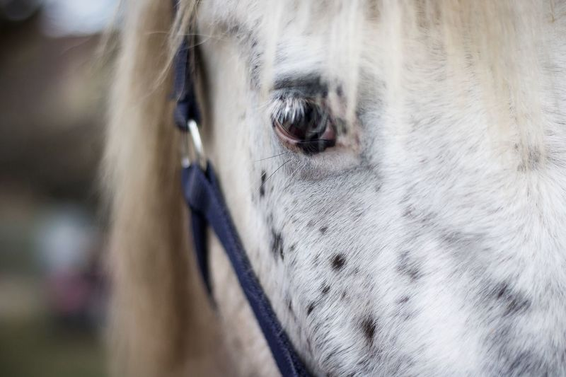 Furr Animal Animals Love Eye Eyes Horse Horses EyeEm Selects Close-up Looking At Camera One Person Portrait Day Water Human Body Part Animal Themes Pets Human Eye Only Men Outdoors People One Man Only Mammal