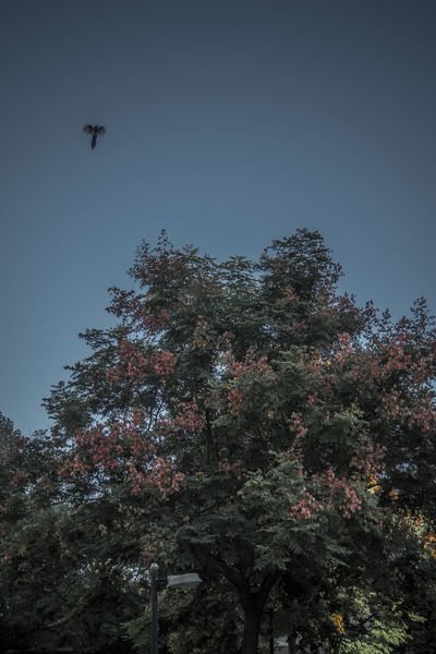 瑟瑟秋风,吹红秋树,隐隐秋寒,请穿秋裤。 red fruits Autumn Bird Clear Sky Fall Flying Low Angle View Red Fruits Tree