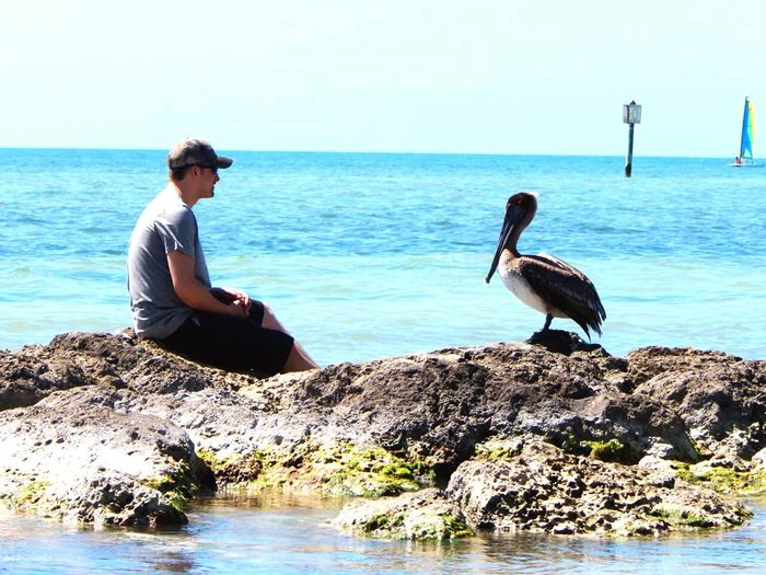 Portrait Of America Keywestflorida Conversation New Friends Little Moments Nature Pelicans