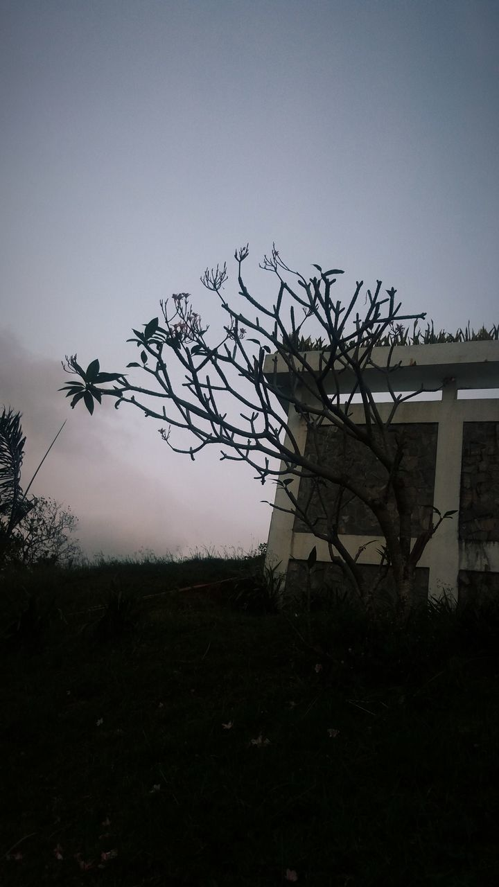 Low Angle View Of Tree And Building At Dusk