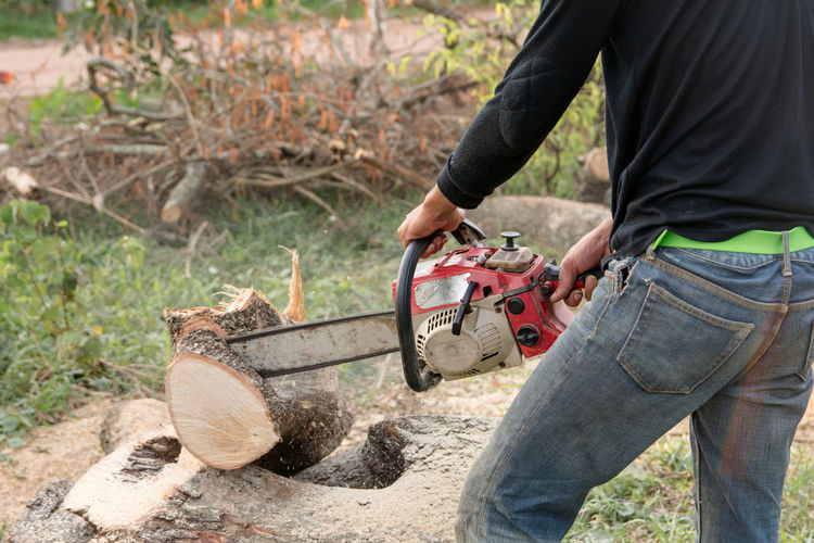 Lumberjack with chainsaw worker cutting tamarind tree trunk. Chainsaw cutting the branch Cut Cutting Machinery Tree Tree Trunk Activity Adult Chainsaw Day Deforestation Expertise Forest Holding Jeans Log Lumber Lumberjack Manual Worker Men Saw Sawing Timber Wood - Material Work Tool Working
