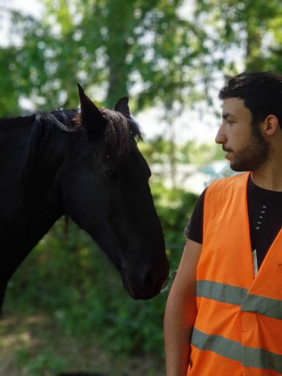 Man wearing reflective clothing standing by horse at farm