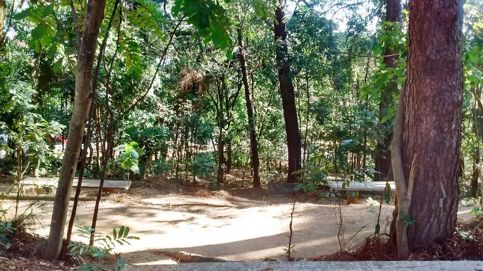 Natureza 🐦🌳 Bosque Maia JahRastafari First Eyeem Photo