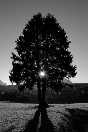 Day Nature No People Outdoors Sky Sunset Tree Black & White Sunlight Shadows & Lights Shadows And Backlighting Shades Of Nature Mountain Landscape Treelovers Tree Silhouette Foresthills Forest View Grass And Sky Grass And Trees Grassy Hillside Grasses And Sun Grass Area