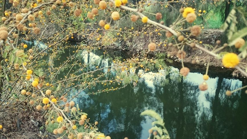 Nature Beauty In Nature Branch Leaf Water Egypt Egyptian Countryside Plant