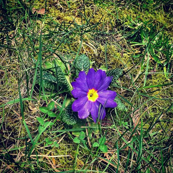 Taking Photos Flowers Naturelovers Hello World Pictureoftheday Spring Flowers Spring