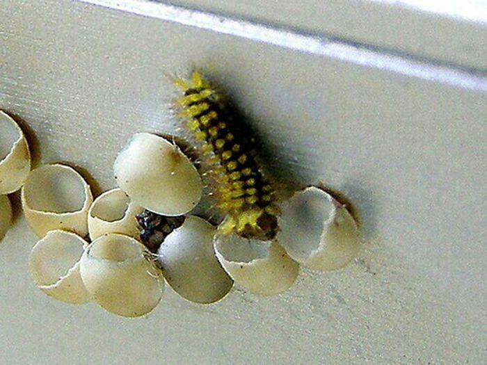 RePicture Growth Extreme Close Up Nature Linda Vista, Coto Brus, Costa Rica Life Caterpillar