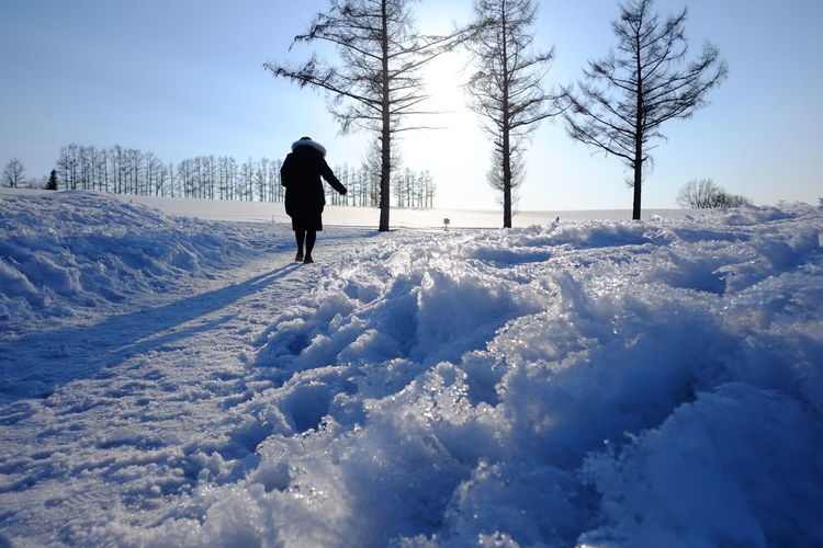 Snow Winter Cold Temperature Tree Nature Landscape Beauty In Nature