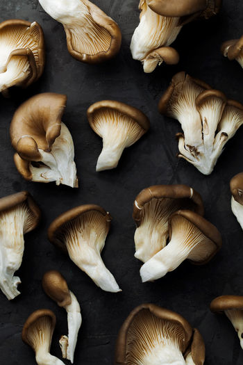 High angle view of mushrooms
