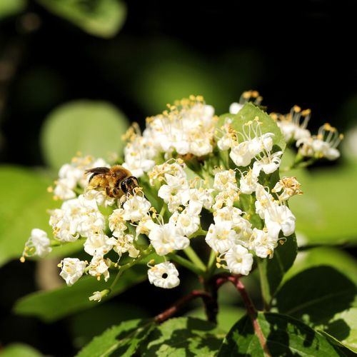 Canon EOS 60D Flower Flowering Plant Animals In The Wild Insect