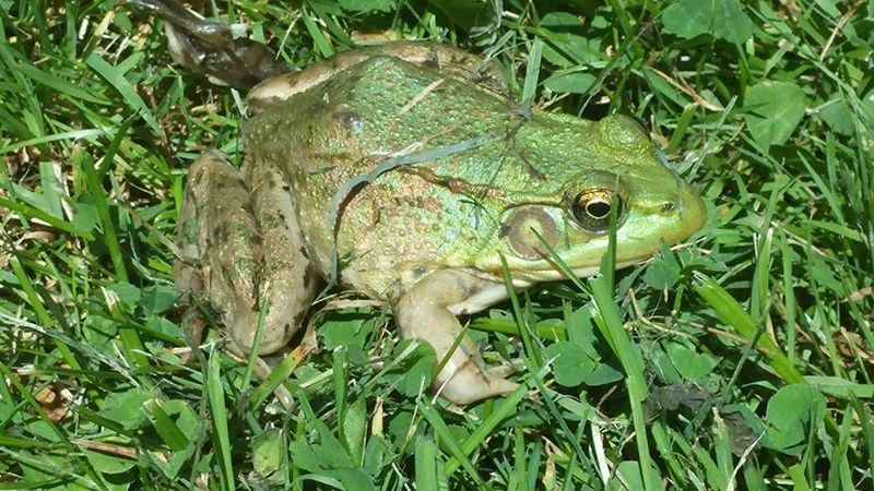 Nature On Your Doorstep Nature Outdoors Check This Out Cheese! Frog Relaxing Summer2015