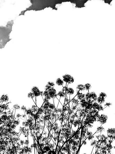 Nature in Black and white Nature Nature Photography Blackandwhite Bnw Springtime