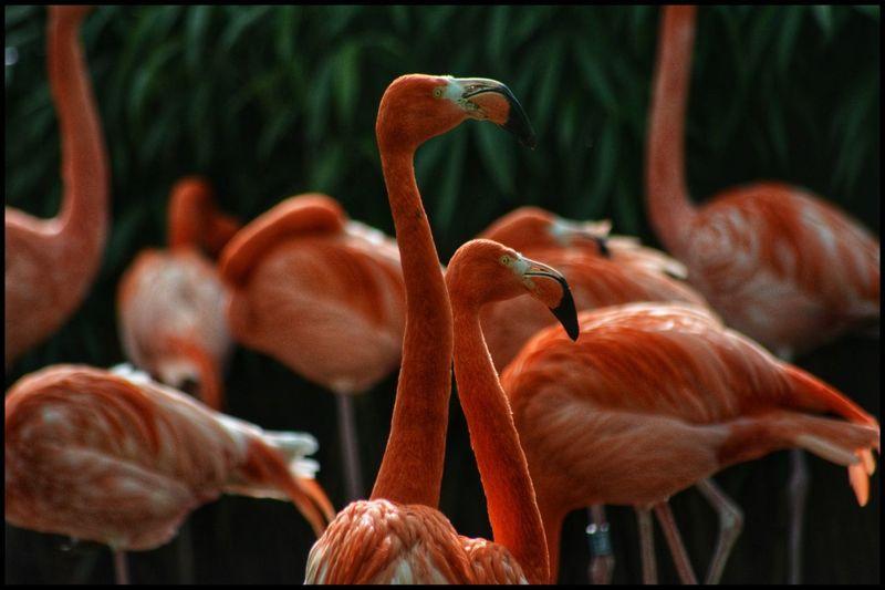 View of birds in water - flamingos