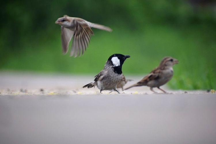 bird life is