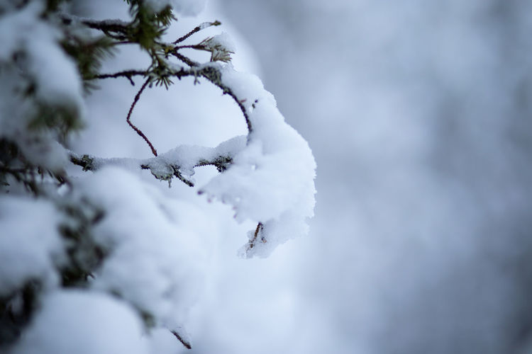 snow dripping