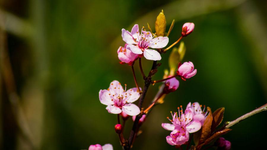 Frühling EyeEm