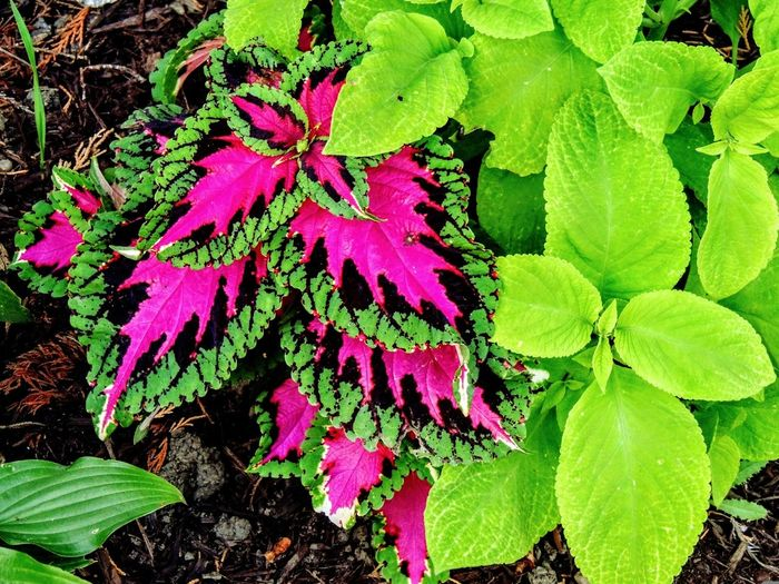 Vibrant floral color Leaf Beauty In Nature Nature Flower Fragility Outdoors Plant No People Freshness Close-up Flower Head Day Green Color Purple Color Blooming Blooms And Buds Blossom Summertime