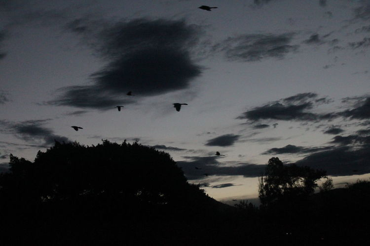 Silhouette birds flying against dramatic sky