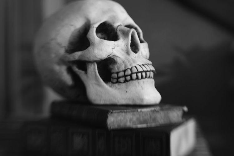 Bone  Close-up
