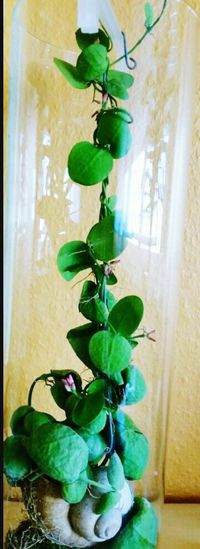 Eyeem Photography Taking Photos My Home Plants Indoor Snail 🐌 Plant