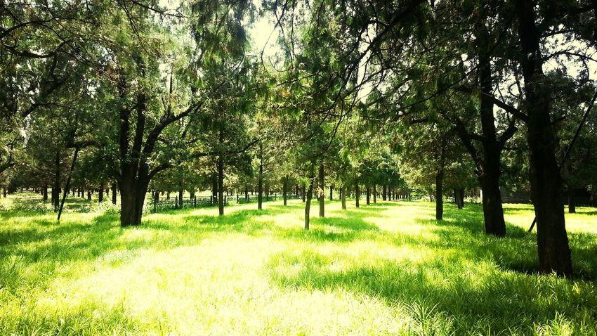 Beijing, China 天壇 Nature Green