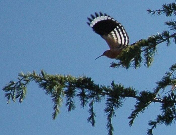 Bird Branch Cedar Tree Nature Tree