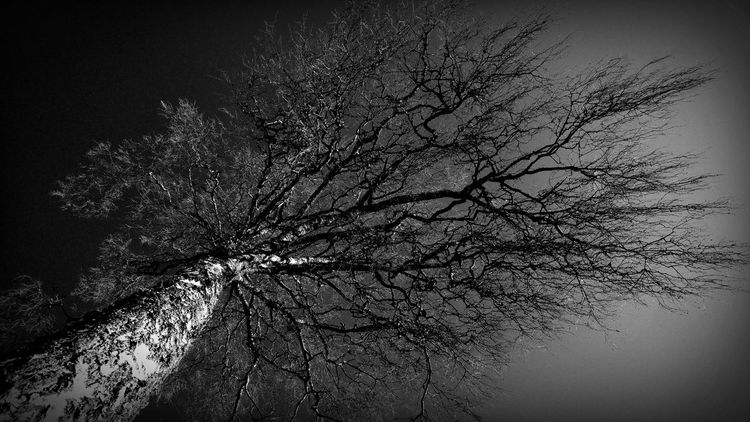 TwistAndShout Mobilephotography TreePorn Windyweather Motion Outstretched Bw Reach Fractal Nature Mindmap