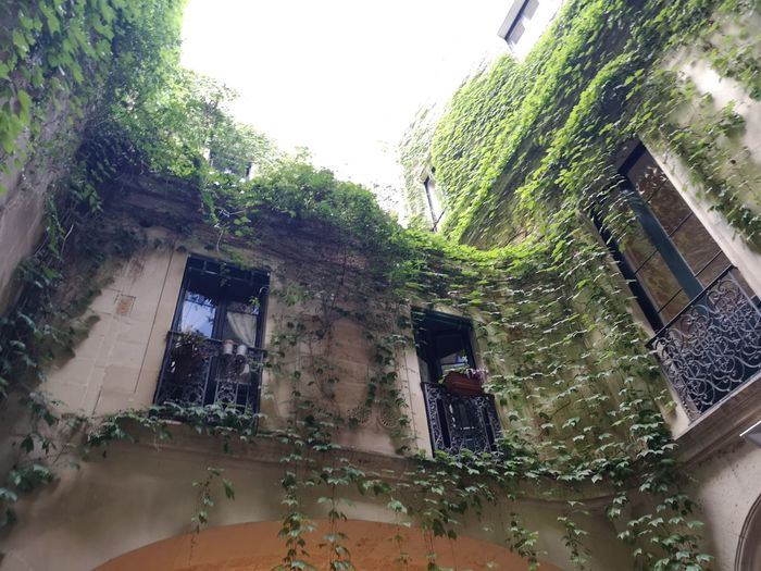 Lecce Corti Salento Italy🇮🇹 Tree Water Window House Architecture Building Exterior Built Structure