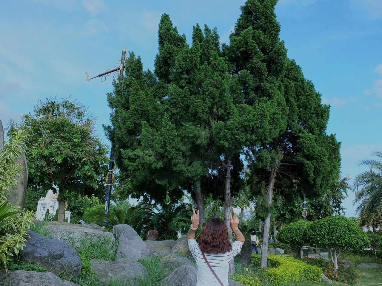 tree, growth, day, outdoors, nature, green color, sky, real people, beauty in nature