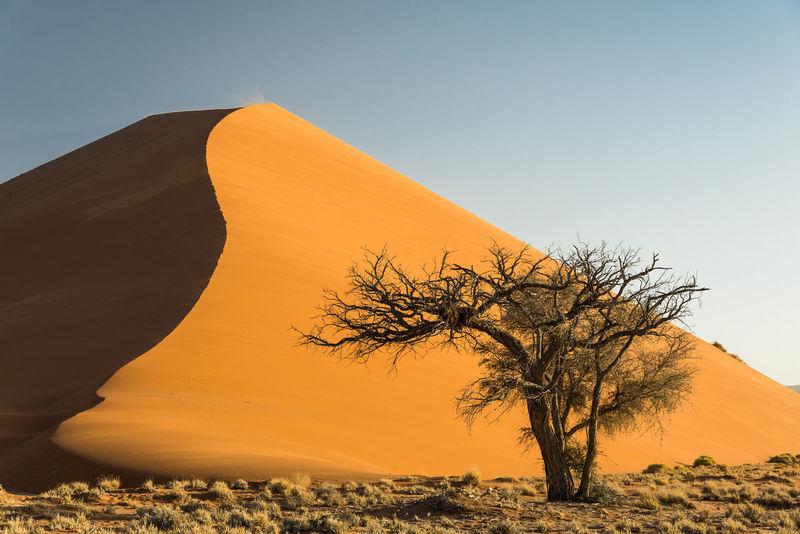 Soussvlei, Namibia Acacia Acacia Tree Namibia Travel Arid Climate Bare Tree Desert Landscape Lone Nature Remote Sand Dune Soussvlei Tranquil Scene