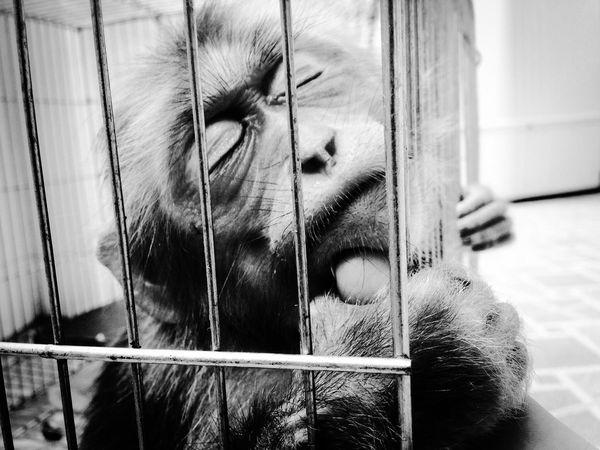 EyeEm Selects One Animal Close-up
