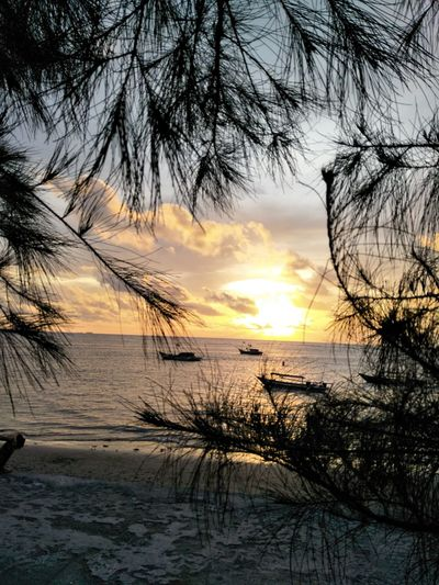 sunset sea horizon over sea water adventure objects and subjects Tes nature_perfection landscapeleaf pine tree Sunset Sea Water Objects And Subjects Tes Nature_perfection Landscape Pine Trees Against The Sky Outdoors Beauty In Nature Tranquil Scene Nature Silhouette Branch Bare Tree Cloud - Sky Scenics Idyllic No People Sand Tree Tranquility Horizon Over Water Sky