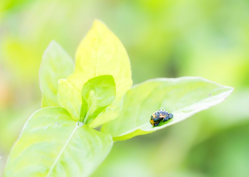SONY ILCE-7M2 SONY SEL90M28G Sony α♡Love Insect Leaf Leafs Ladybug Close-up Green Color Outdoors Plant Nature Nature Beauty In Nature No People Live For The Story