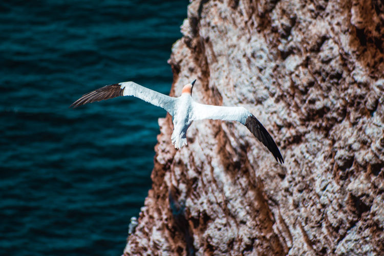 Seagull flying over rock