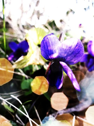Second edit Filter Edit Play Mobilephotography Flower Head Flower Petal Purple Close-up Plant Plant Life Blooming