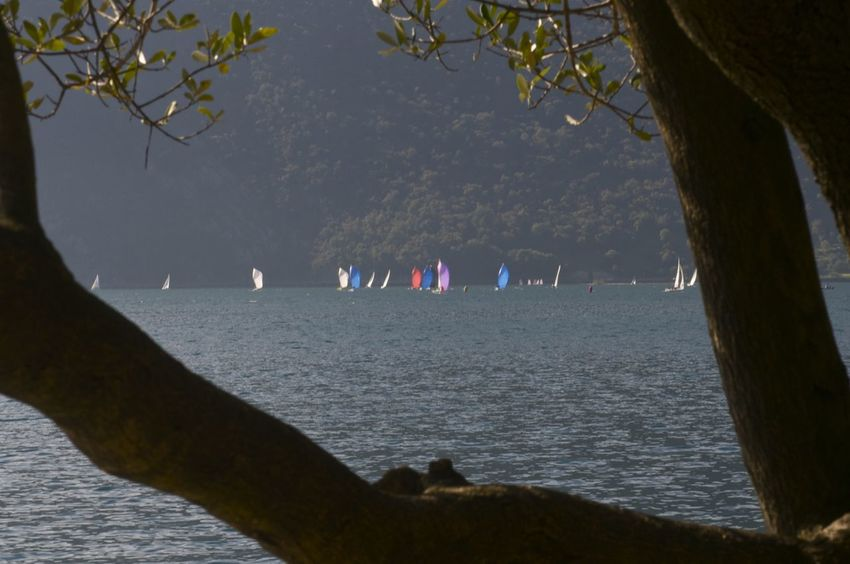 Autumn Spinnakers Vespa Boats Day Flag Iseo Lake Italy Lake Nature Outdoors Water