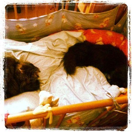 Hihi Voll Swetty Kittys  sindeinfachdiebestenliebesieinstanightinstalovef4f