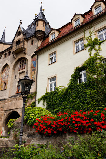 Meissen Cityscape Porcelain  Architecture Building Exterior Built Structure Day Flowers Meißen Old Buildings Outdoors Roses Vines On Wall