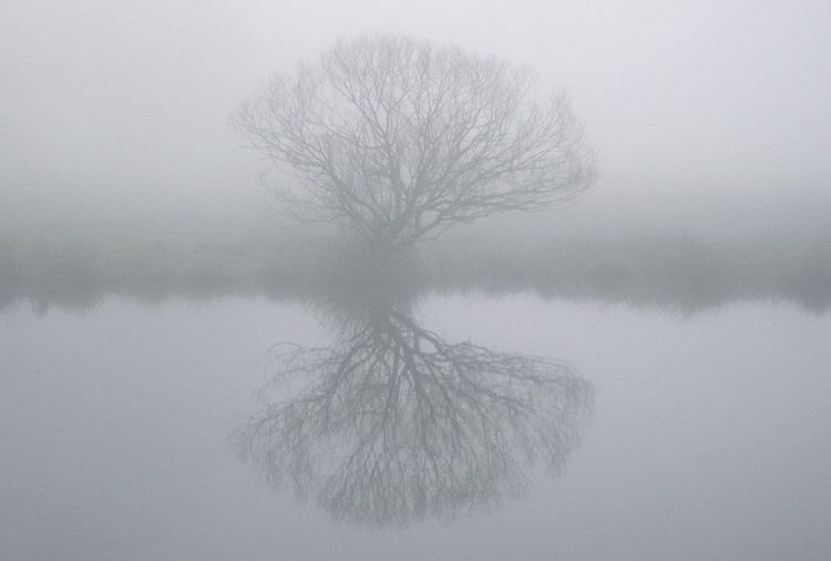 Tree by a pond in fog Reflection Water