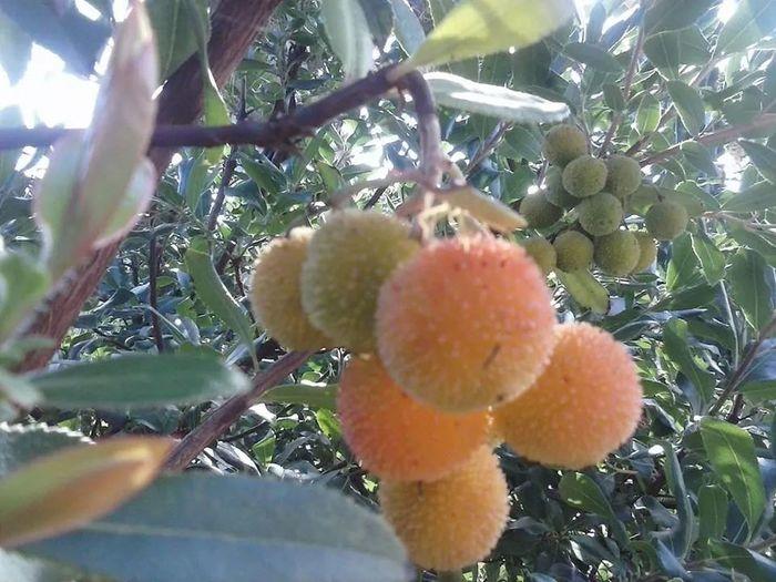 Fruit Nature Flower Tree