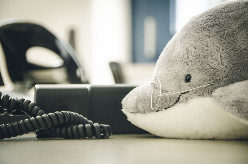 Phone Dolphins Doll Dolphin On The Phone No People Indoor Photo Weird Taking Photos Environmental Conservation