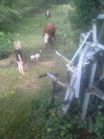 Steer Herders