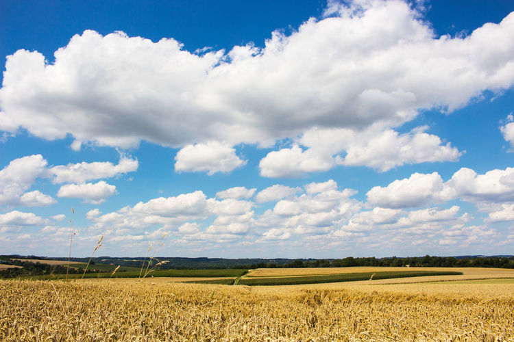 Landscape Sky Field Cloud - Sky Environment Land Beauty In Nature Agriculture Tranquil Scene Scenics - Nature Tranquility Plant Rural Scene Nature Growth Crop  Day Farm No People Cereal Plant Outdoors Plantation Cumulus Cumulus Cloud
