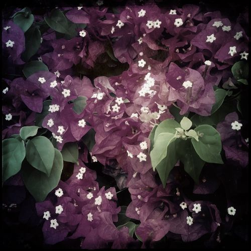 Flower in Sintmarteen IPhoneography Hipstamatic Beauty In Nature