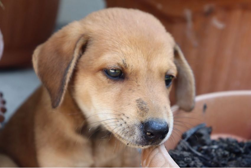 Botchog #sleepydog #sleepy #animal #puppy #dog #EyeEmNewHere First Eyeem Photo EyeEmNewHere The Still Life Photographer - 2018 EyeEm Awards The Photojournalist - 2018 EyeEm Awards