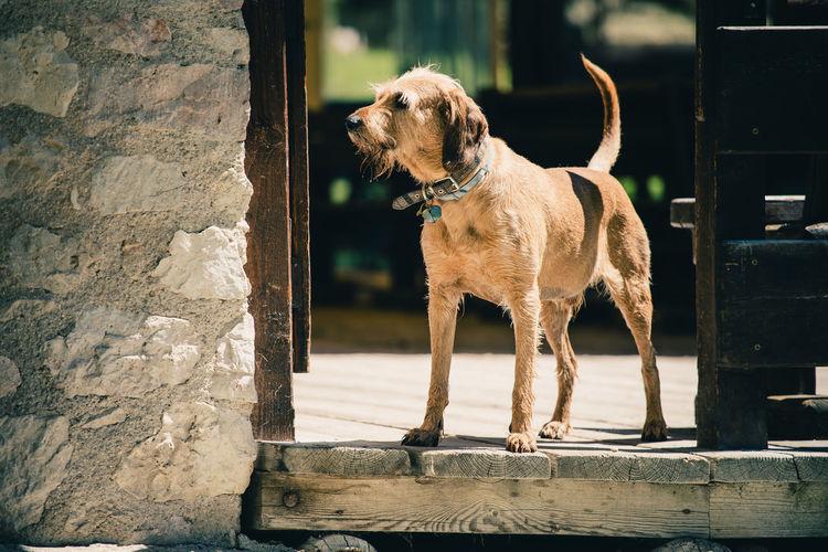 Dog looking away outdoors