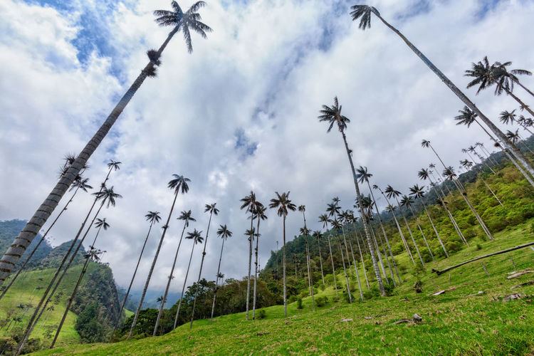 Low angle view of palm trees by mountain against sky